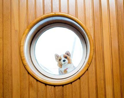 Clarence the Cuddly Corgi peeks through the porthole in the Sun Lounge.
